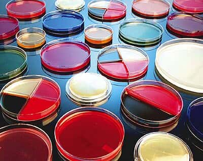 prepared agar plate standard methods agar 10pk from